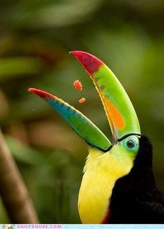 Toucan ... birds are magical