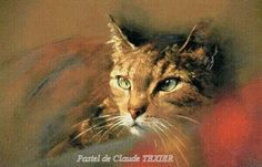 Claude Texier Pastel Drawing, Pastel Art, Painting & Drawing, Portraits Pastel, Pet Portraits, Son Chat, Types Of Animals, Imagines, Art Techniques