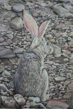 Free Downloadable Guide: Hare in Coloured Pencil | Art Tutor