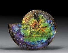 "Up for auction back in 2010 was this ""EXCEPTIONAL GEMSTONE AMMONITE: ...one of the rarest gemstones in the world, formed from the nacreous shell linings of Cretaceous ammonites in only one small area of North America."" This particular specimen is even more rare because of the ""quantity and quality of these rare colors"" and the fact that it ""retains areas of excellent three-dimensionality and detail."" 20 1/4 inches wide; estimate $40,000-45,000"