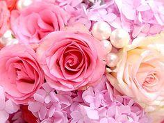 ピンク      お花       綺麗      可愛いの画像 プリ画像