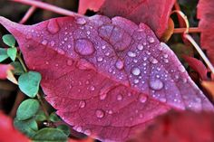 Raindrops on Red Leaf by John Win on 500px
