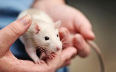 """A Kind Way to Kill Lab Animals? Researchers Ask the Wrong Question - """"To debate the """"kindest"""" way to kill animals after intentionally causing their suffering in order to determine what is morally acceptable and develop guidelines about how to do it seems kind of moot. For the millions of animals who are suffering unheard and locked in cages behind closed doors waiting for whatever will be done to them next, guidelines likely don't mean much."""""""