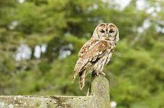 Image result for owls dumbest birds