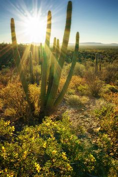 Organ Pipe Cactus National Monument, Arizona, by Anne McKinnell  (pinned by haw-creek.com)