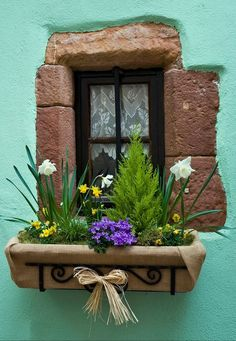 Riquewihr, Haut-Rhin, France beautiful wall colour with a rustic touch and flowers Window Box Flowers, Window Boxes, Flower Boxes, Old Doors, Windows And Doors, Garden Windows, Window View, Through The Window, Doorway