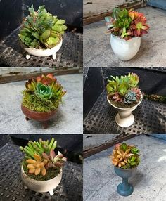 Mini dish gardens, or perhaps quirky wedding favours.