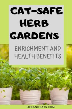 Grow a cat-friendly herb garden for indoor enrichment for your cat. Cat-safe herbs provide health benefits and enrich Kitty's palate to prevent boredom. Cat Safe House Plants, Houseplants Safe For Cats, Cat Plants, Cat Garden, Herb Garden, Lawn And Garden, Growing Herbs Indoors, Indoor Plants, Indoor Gardening