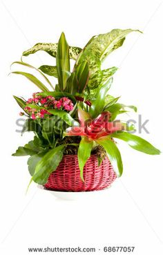 Sold! stock photo : Gardening - Pot with indoor green decorative plants.