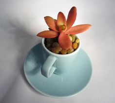 PLANTED SUCCULENT Potted Succulent Expresso Cup by sweetsucculents, $9.98