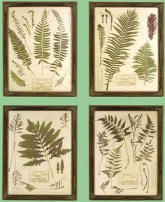 pressed ferns - more botanical feel