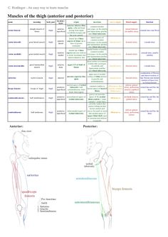 An easy way to learn lower limb muscles by Christiane Riedinger via slideshare Lower Limb Muscles, Quadriceps Femoris, Physical Therapy School, Musculoskeletal System, Muscular System, Human Anatomy And Physiology, Muscle Anatomy, Anatomy Study, Massage Techniques