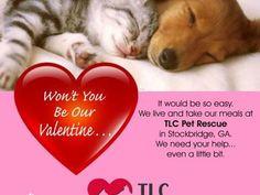 HELP FEED A SHELTER PET FOR VALENTINE'S DAY We need your help for Valentines!! As you all know the cost of rescuing dogs & cats is not cheap. We are asking for donations, no amount is too small, to help feed, & continue to care for our animals. Instead of wasting money on flowers, candy & stuffed animals, put that money to good use & feed a rescue dog or cat. Your continued support is very much appreciated! Let's do this!!! YOUCARING.COM: https://www.youcaring.com/tlc-pet-rescues-514111