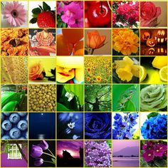 Rainbow Connection mosaic this is so pretty. i would love to have these as individual little paintings on one wall of my studio Love Rainbow, Taste The Rainbow, Over The Rainbow, Rainbow Colors, Rainbow Stuff, Rainbow Flowers, Rainbow Connection, World Of Color, Color Of Life