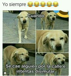 Find images and videos about funny, lol and humor on We Heart It - the app to get lost in what you love. Funny Animal Memes, Funny Animal Pictures, Funny Images, Funny Animals, Funny Jokes, Funny Spanish Memes, Spanish Humor, Bux Bunny, New Memes