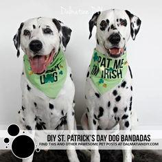 DIY St. Patrick's Day Dog Bandanas - Dalmatian DIY Dog Treat Bag, Dog Texts, Bandana Design, Craft Stash, Pet Dogs, Pets, Complimentary Colors, Animal Crafts, Dog Bandana