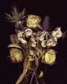 "Saatchi Art Artist Aubrey Laret; Photography, ""flowers"" #art"