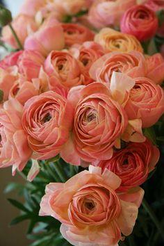 Thasos, Wonderful Flowers, Ranunculus, Flower Power, Flower Arrangements, Delicate, Bloom, Diy Crafts, Bridal