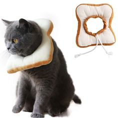 Funny and practical this cone of shame will prevent your cat over-grooming a wound so that it heals... and also make them look fabulous.