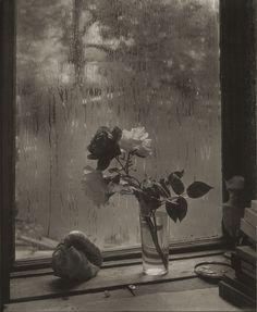 Josef Sudek - La Dernière Rose, 1956, Musée des beaux-arts du Canada, Ottawa. © Succession Josef Sudek