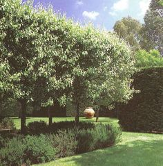 garden design ideas for small gardens Formal Gardens, Small Gardens, Outdoor Gardens, Courtyard Gardens, Lawn And Landscape, Landscape Design, Garden Trees, Trees To Plant, Snow Pear