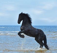 Фрея - фотографии - Lumy - конники - equestrian.ru