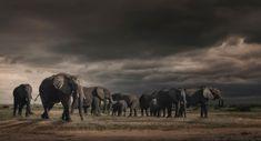 dusk and dawn – Bruna Photography Dusk Till Dawn, That Moment When, Thunder, Wildlife, Scene, Elephants, Photography, African, Animals