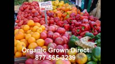Organic Food Coral Springs Farmers Market 877-565-3239 - http://goodvibeorganics.com/organic-food-coral-springs-farmers-market-877-565-3239/