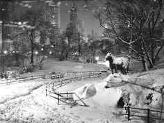 Balto a Central Park
