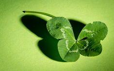 In filozofia asiatica, plantele bogate, ramificate si cele cu flori semnifica cresterea materiala si spirituala. Succesul este atras de aerul proaspat cu note ierboase care iti schimba starea de spirit si te fac sa devi receptiv la oportunitatile care-ti ies in cale. De aceea, specialistii Feng Shui recomanda amplificarea norocului prin pozitionarea unei asemenea plante …