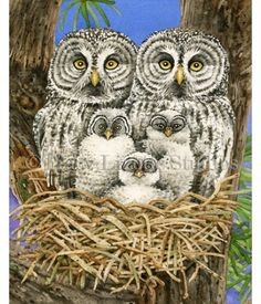Meet the Great Grey Owl family! This watercolor painting is part of my Owl Tree Collection.