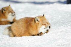 Fur ball foxes #littlefurballs #soakingupthewintersun