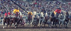 calgary stampede - Google Search Calgary, Funny Pictures, Horses, Explore, Google Search, Wallpaper, Animals, Fanny Pics, Animales