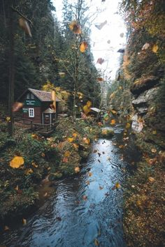 The autumn in a beautiful gorge - # autumn # gorge # BEAUTIFUL - Herbst - Natur Beautiful World, Beautiful Places, Autumn Aesthetic, Autumn Cozy, All Nature, Autumn Nature, Autumn Trees, Cabins In The Woods, Fall Halloween