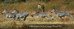 Safari to Time and Tide Luwi with Africa Travel Resource Mountain Zebra, Time And Tide, Small Group Tours, African Safari, Travel Planner, East Africa, Africa Travel, Zebras, National Parks