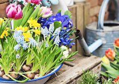Talven jälkeen ensimmäiset sipulikukat hurmaavat. Pääsiäisen kukat löytävät muotonsa asetelmissa ja kransseissa. Katso inspiroivat ideat Viherpihasta ja tee asetelmat itse!