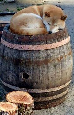 Shibe barrel