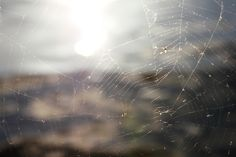 Web of a Spider