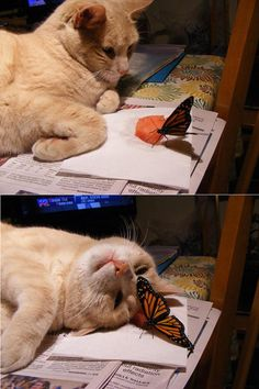 Oh, Hello Mister Butterfly @Ashlee Outsen Nolan, you are contributing to my crazy cat lady transformation!