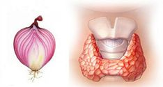 Onion is a well known to be a skin cleaner, bacteria killer, and blood purifier.Another way onion can be helpful is in the case of a disturbed thyroid.Igor Knjazkin, a doctor from Sant Petersburg, wrote a Thyroid Disease Symptoms, Thyroid Issues, Thyroid Gland, Thyroid Problems, Hypothyroidism, Thyroid Cancer, Red Onion Recipes, Natural Medicine, Alternative Health