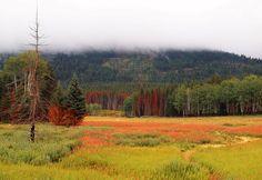 Национальные парки, природа Канады