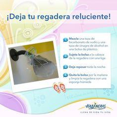 Con las vacaciones también viene la limpieza de primavera y uno de los lugares que más atención necesita es el baño, ¿tienes problemas para limpiar tu regadera? Déjala reluciente siguiendo este tip: