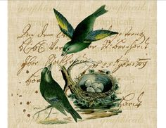 Pair teal birds Nest French writing ephemera Digital download image for iron on fabric transfer burlap decoupage pillows tags No. 1844