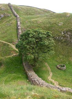 Sycamore Gap in Northumberland UK