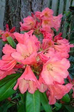 'September Song' Photo by Jan R. September Song, Beautiful Roses, Songs, Garden, Plants, Garten, Flora, Plant, Lawn And Garden