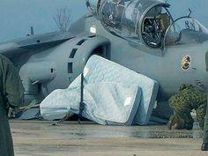 Harrier Catching Zzzz's