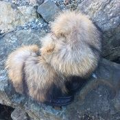 Shapata Raccoon Mukluks mini mukluks black