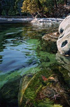 Intertidal-Realm - Carol Evans