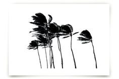 Palm Trees in the Wind by Simone Klein at minted.com