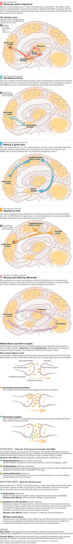 Your brain on ADHD. How the brain pays attention. From the Washington Post Adhd Odd, Adhd And Autism, Developement Personnel, What Is Adhd, Adhd Medication, Adhd Brain, Adhd Help, Adhd Strategies, Attention Deficit Disorder